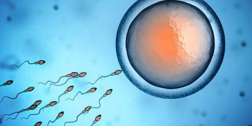 Plodnost žen a mužů
