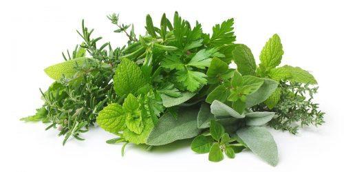Čaje a bylinky pro kojící ženy